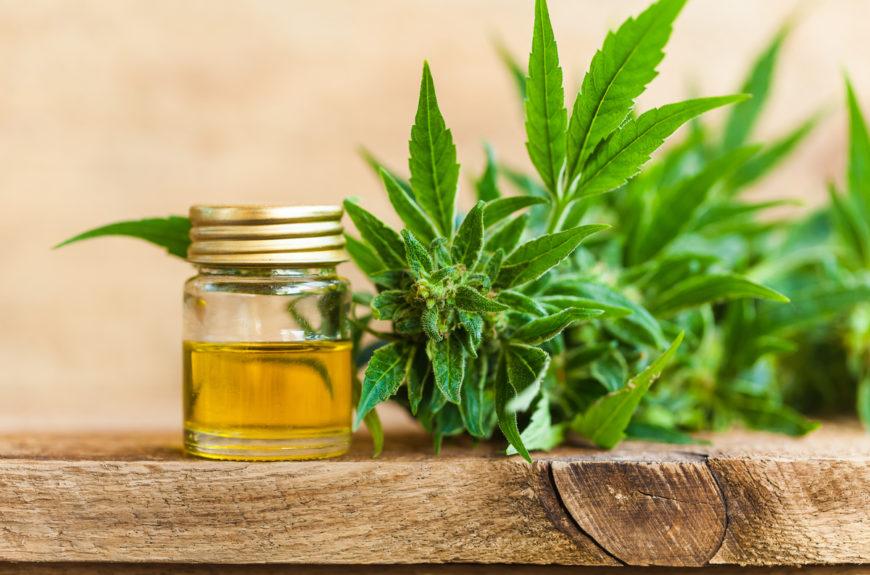Cannabis and CBD oil.