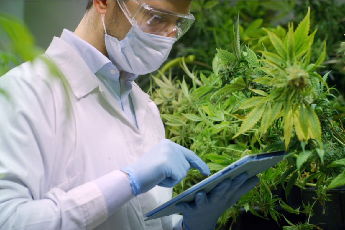 A researcher researching CBD for autoimmune disorders